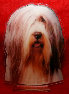 statuette-photosculptee-10x15-cm-chien-bearded-collie-1-dog-hund-perro-cane