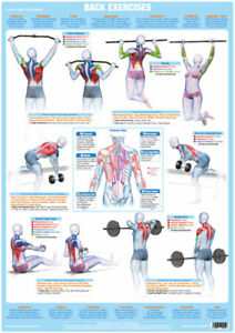 back muscles weight training poster body building gym