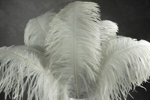 "1 WHITE Ostrich FEATHER 23-28/"" Full Wing PLUM; Bridal//Wedding//centerpiece"