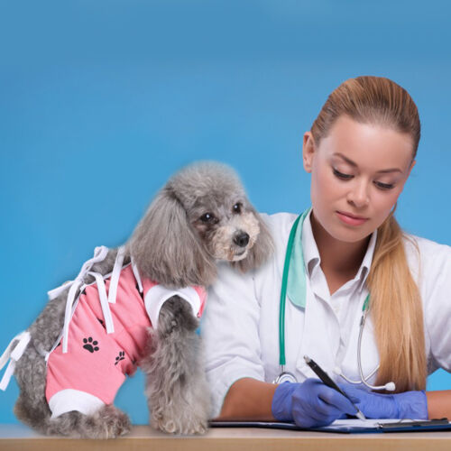 Paw Print Dog Medical Shirt Rehabilitation Injury Disease Surgery Clothes XS S L