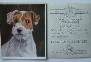 "Godfrey Phillips ""Our Dogs"" 1939 10 The Chow Chow No"