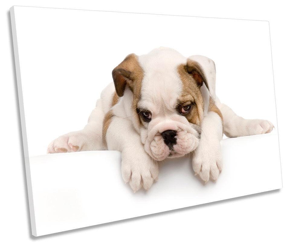 Cute British Bulldog Puppy SINGLE CANVAS WALL ART Print Picture