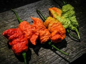 20 Death Spiral Reaper Heirloom hot pepper plant seed flowers rare colorful