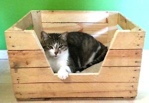 Dierenmand kat hond dier fruitkist kist hout dieren bed poezen