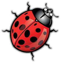 Details about Coccinellidae Ladybird Ladybug lady beetle Car Bumper Window  Sticker Decal 4