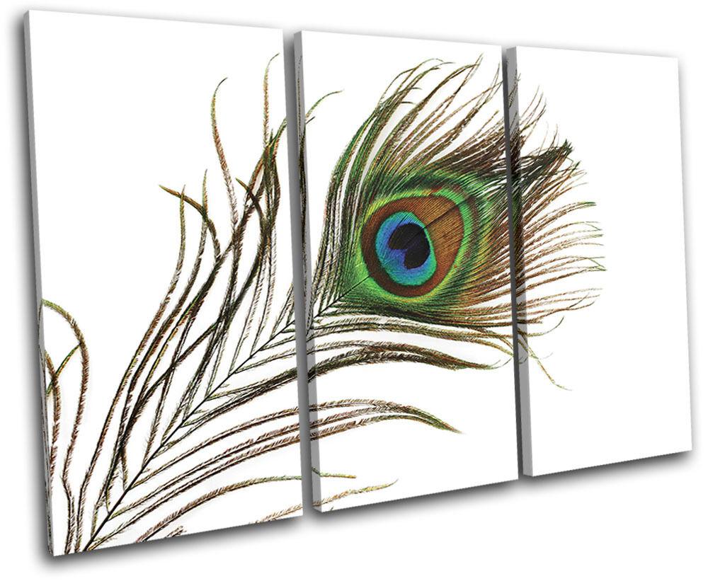 Peacock Feathers Animals TREBLE Leinwand Wand Kunst Bild drucken