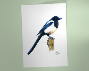 Magpie-Art-Print-British-Garden-Bird-of-watercolour-pencil-drawing