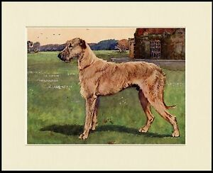 IRISH TERRIER DOG LOVELY PRINT MOUNTED READY TO FRAME