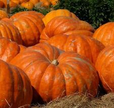 Heirloom 10 Seeds Giant Pumpkin Cucurbita RARE Ornamental Vegetable