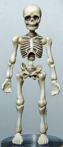Re-ment Miniatures Re-ment Pose Skeleton Human Set new arrival Halloween RARE