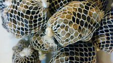 20 pre filled pre tied carp fishing bait mesh pellet balls pva mesh + 50ml glug