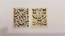 Vintage butterfly display poster set 1:12 scale dolls house natural study UK