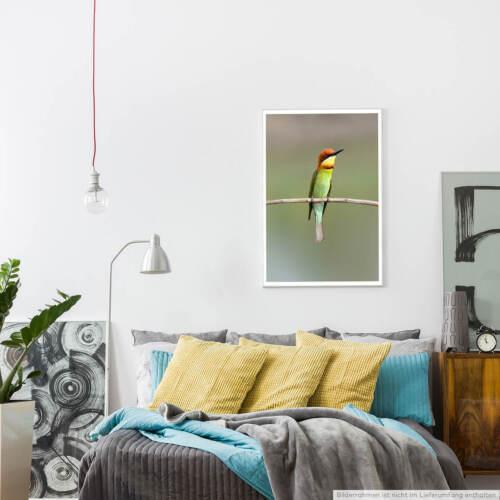 60x90cm Poster Tierfotografie – Schwalbenspinte auf einem Zweig