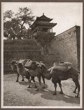 1920's CHINA GRAVURE PAGEANT OF PEKING DONALD MENNIE - CAMEL STUDY