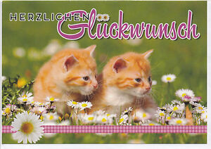 Klappkarte Zwei Kleine Katzen Mit Gluckwunsch Zum Geburtstag Ebay