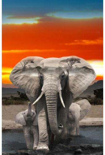 "Elephants-Mama /& Two Babies-Hoffman Fabrics-Digital Print-Sunset-43/"" x 28/"""