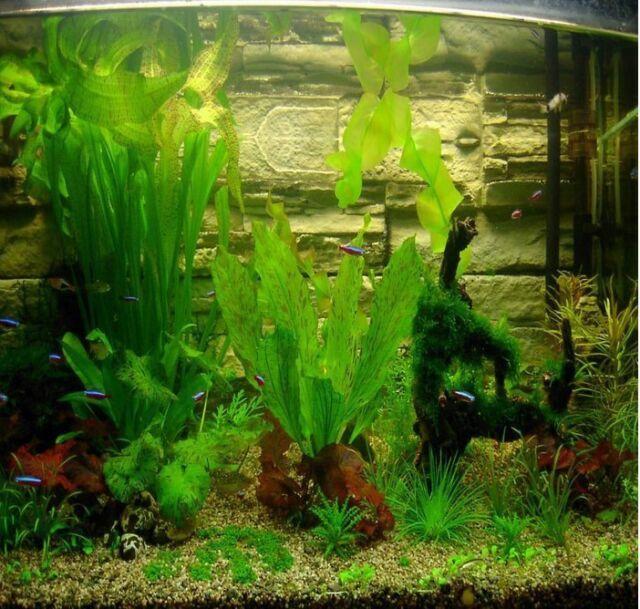 300 Seeds! - aquarium grass seeds (mix) water aquatic plant seeds (15 kinds)