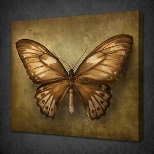 Image Is Loading BEAUTIFUL VINTAGE BUTTERFLY CANVAS WALL ART PICTURE PRINT