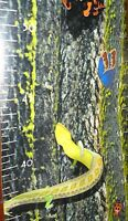 Growth Chart Rain Forest Eyes In The Forest Child's Wall 327-28854 Reptiles Bugs
