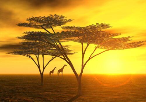 Fototapete Afrika  Tapete Vliestapete
