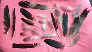Naturel Plumes x25 Real Free Fallen Plumes, Noir, Gris, Blanc, free p&p