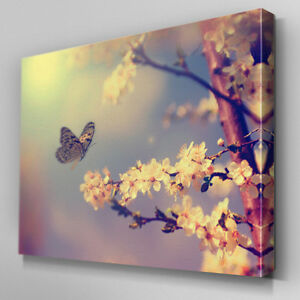 Image Is Loading FL332 Cherry Blossom Butterfly Canvas Wall Art Multi