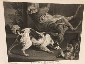 Details about 1778 John Boydell etching, engraving of dog & cat post-hunt,  Irish artist Jervas