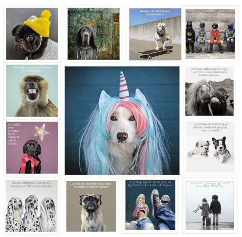 Cards Cat Dog Quote Funny Pet Birthday Wedding Pug Bulldog Llama