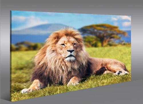 Bild auf Leinwand Löwe V2 König der Tiere Löwen 1K Leinwandbild Wandbild Poster