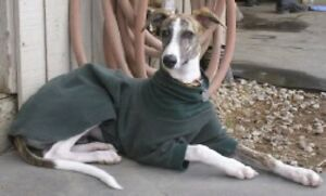 Any Solid Color Pullover Jammie Coat Greyhound Saluki Doberman