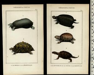 Turtles-Tortoises-c-1830-039-s-collection-old-prints-Natural-History-Lot-of-4