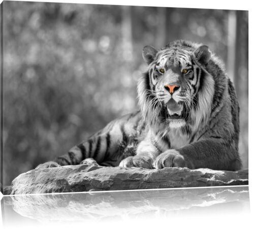 Tiger Leinwandbild Wanddeko Kunstdruck