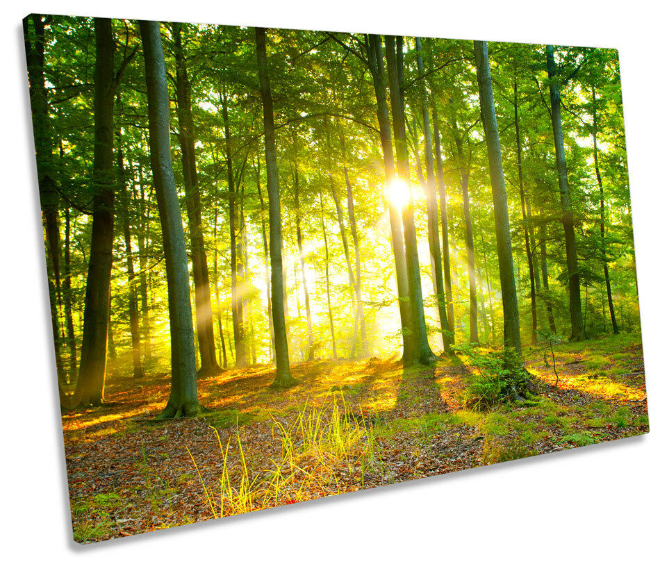 Sunlight Forest Forest Forest Trees Sunset SINGLE CANVAS WALL ART Picture Print cb7df0