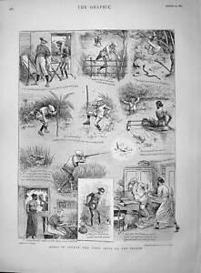 Original-Old-Antique-Print-1895-Sport-Ceylon-Hunting-Jack-Nimrod-Snake-Leeches