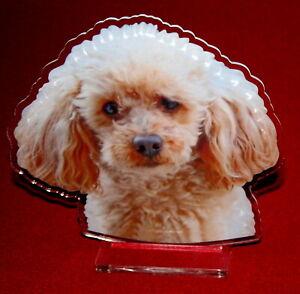 statuette-photosculptee-10x15-cm-chien-caniche-6-dog-hund-perro-cane