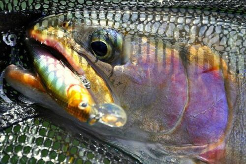 Dynamic Lures J-Spec Ghost Fish
