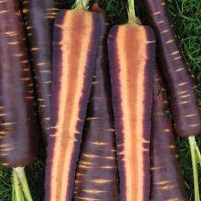 500 Graines de Carotte Violet - Pourpre / Potager Légumes Plantes