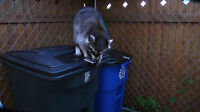 Garbage Loc + Lid-loc Keeps Animals Out For Unhinged Trash Can- Lock Them Out