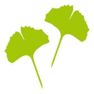 1 Paire 2 Feuilles 25 Cm Vert Entièrement Ginkgo Feuille Autocollant Tatouage Ginko Gingko Diapositive-afficher Le Titre D'origine