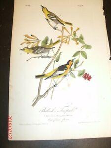 AUDUBON-039-S-BIRDS-of-AMERICA-BULLOCK-039-S-TROPICAL-No-218