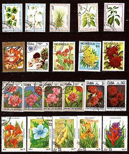 TODOS-LOS-paises-de-la-flores-y-plantas-rosas-orquideas-flor-eucalyptus-82m378