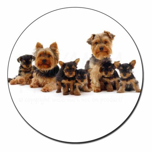 Yorkshire Terrier Dogs Fridge Magnet Stocking Filler Christmas Gift AD-Y11FM
