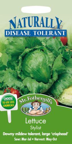 200 graines Monsieur Fothergills-paquet illustré-légumes-Laitue styliste