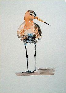 NSmorrart-Original-5-034-x7-034-Watercolor-Realism-Painting-Bird-Bar-tailed-Godwit