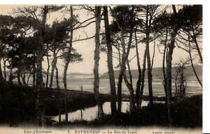 Over-100-year-old-Original-Vintage-Postcard-of-Lupin-Woods-Rotheneuf-NW-France