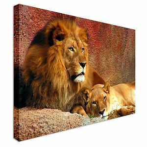 Image Is Loading Animal Lion And Lioness Resting Canvas Art