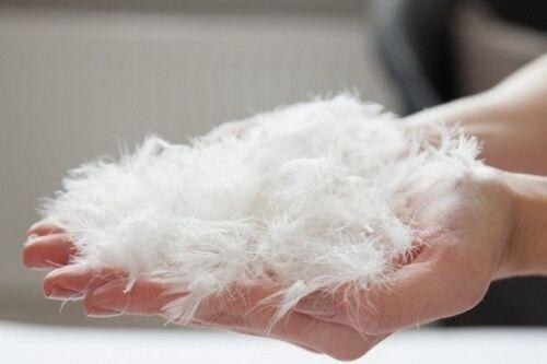 Daunen//Federn Seitenschläferkissen Kissen Schwangerschaftskissen Rückenlehne NEU