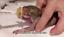 2-x-Miracle-Nipple-Mini-Original-Teats-amp-Oring-Syringes-Puppy-Kitten-Whelping thumbnail 9