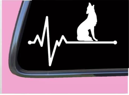 "Coyote Lifeline TP 229 Sticker 8/"" Decal howler hunting camo decoy caller"