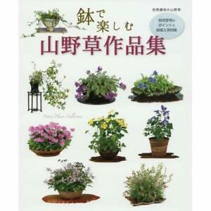 Bonsai-Book-Mountain-wild-grass-Works-enjoy-in-the-pot-cultivation-management